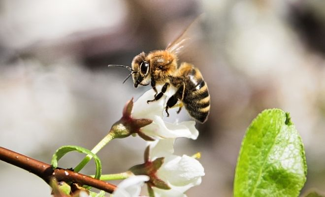 Actions To Take To Protect the Bee Population