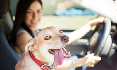 How To Make Car Rides With Your Dog Easier